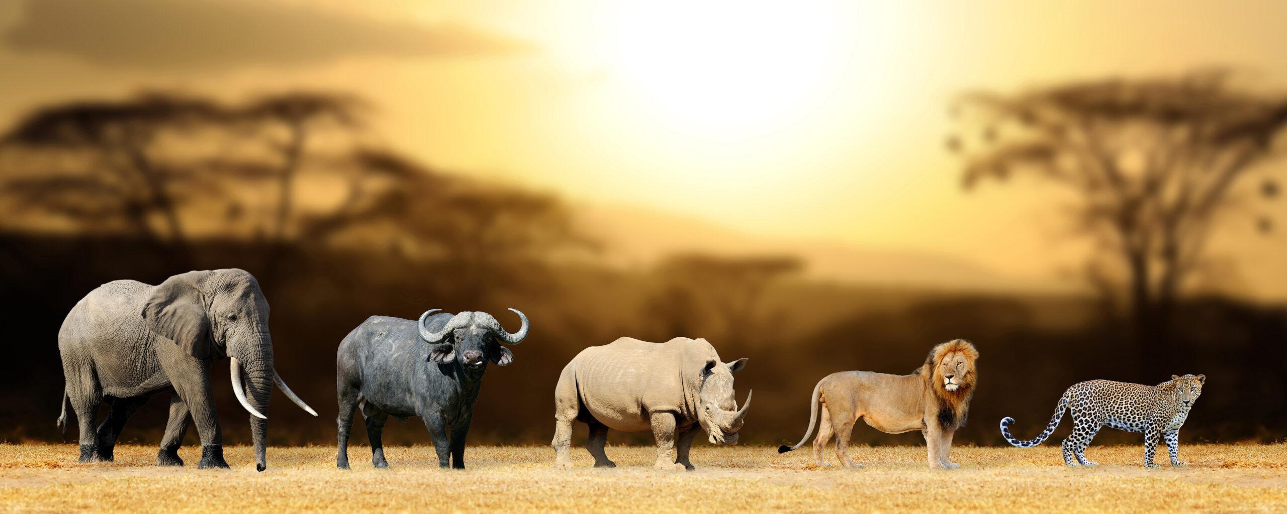 Die Big Five sind wichtige Meilensteine – ob auf einer Safari oder im Unternehmen.
